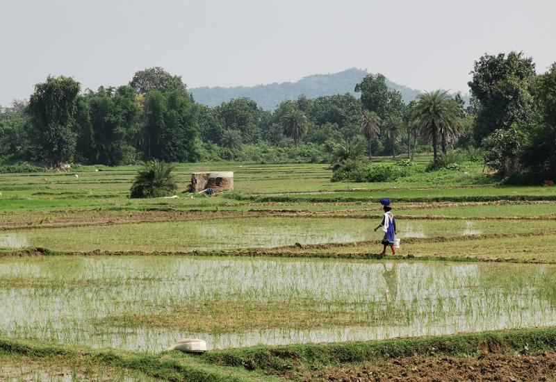 インドの田舎 田んぼ