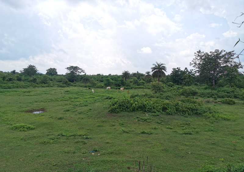インドの田舎